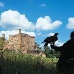 dalhousie-castle-falconry